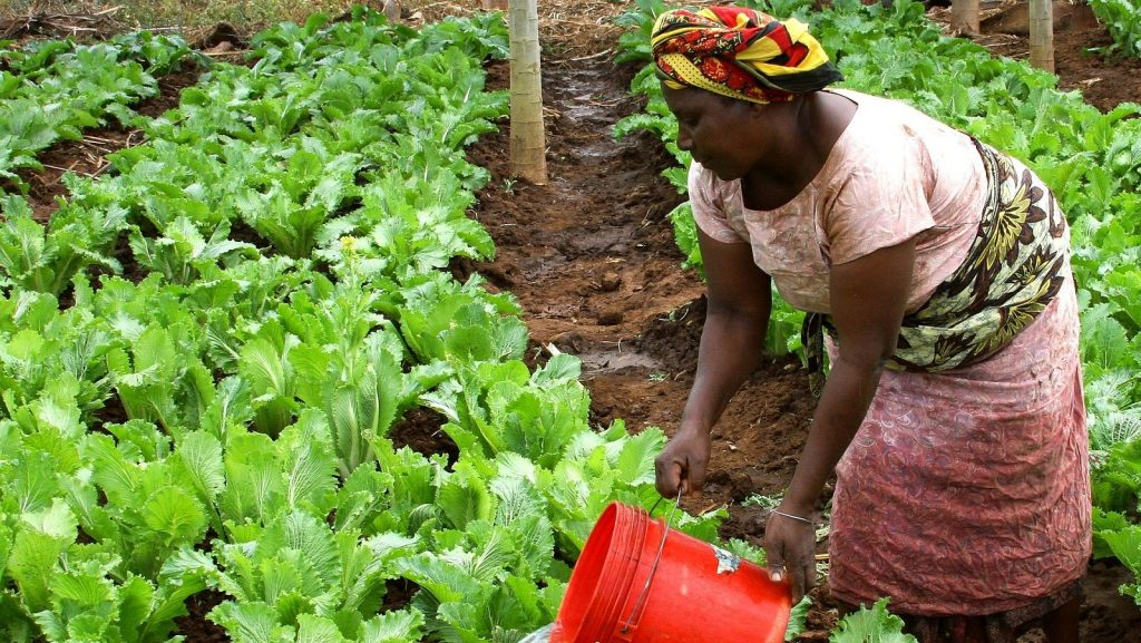 https://pixabay.com/photos/woman-watering-crops-africa-671909/
