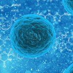 via https://pixabay.com/illustrations/bacteria-illness-virus-infection-163711/