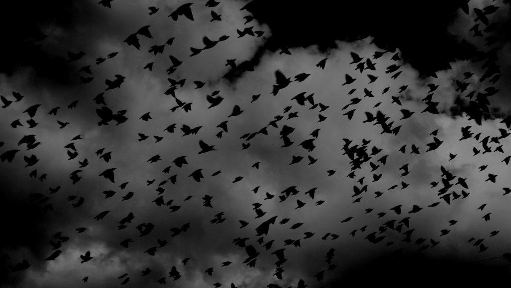 https://pixabay.com/photos/birds-flock-wings-flying-sky-691274/