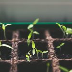 South Africa SA startups investors investment businesses venture capital agritech SAVCA
