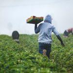 Hellochoice agritech fintech agriculture startup